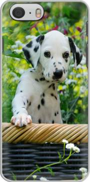Cute Dalmatian puppy in a basket  Hoesje voor Iphone 6 4.7