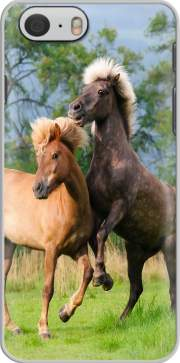 Two Icelandic horses playing, rearing and frolic around in a meadow Hoesje voor Iphone 6 4.7