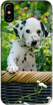 Cute Dalmatian puppy in a basket  Hoesje voor Iphone X / Iphone XS